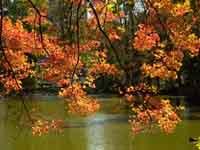 Public Gardens Autumn