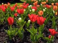 Public Gardens Spring